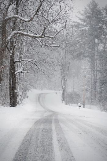 Snow covered road amidst bare trees