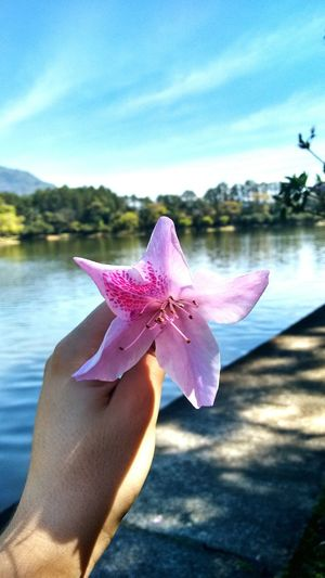 Nature Photography Natural Beauty Flowers Flowers,Plants & Garden Brazil Brasil ♥ Cloud - Sky Water Focus On Foreground Person Lake Holding Personal Perspective Close-up Lifestyles Tranquility Nature Tranquil Scene Sky Beauty In Nature Majestic Outdoors Cloud - Sky Day Scenics First Eyeem Photo