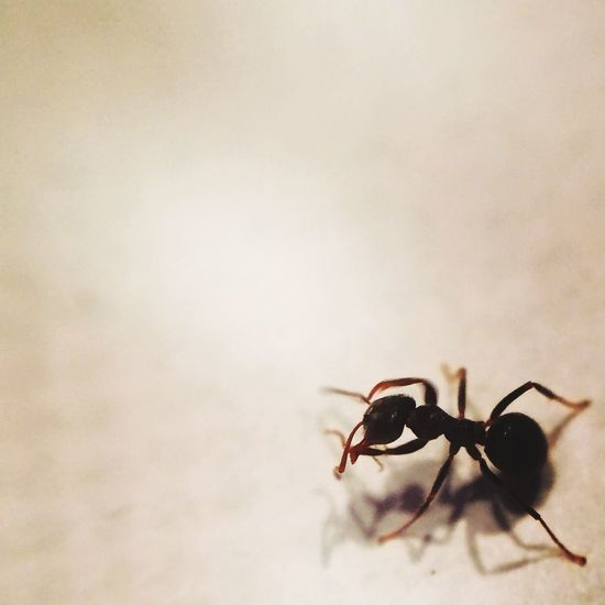 The Week On EyeEm Spring Ant Macro Macrolens IPhoneography Iphone5s Closeup Onlymobilephoto