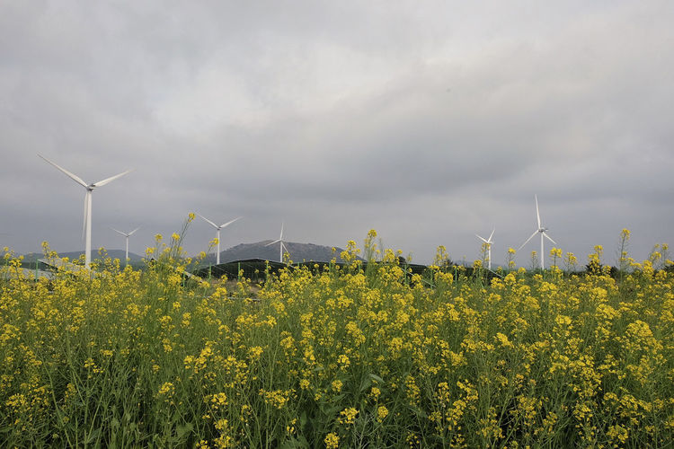 Wind Turbine Fuel And Power Generation Environmental Conservation Environment Renewable Energy Turbine Wind Power Alternative Energy Sky Field Beauty In Nature Yellow Flower Land Landscape Nature Rural Scene Day Growth Plant No People Outdoors Sustainable Resources