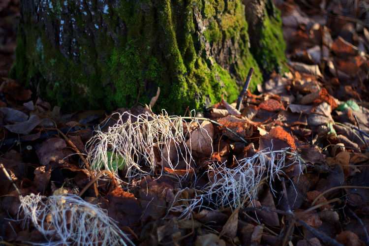 Autumn Horsetail Moss & Lichen Close-up Day Equisetum Field Forest Leaves Moss Nature No People Outdoors Tree