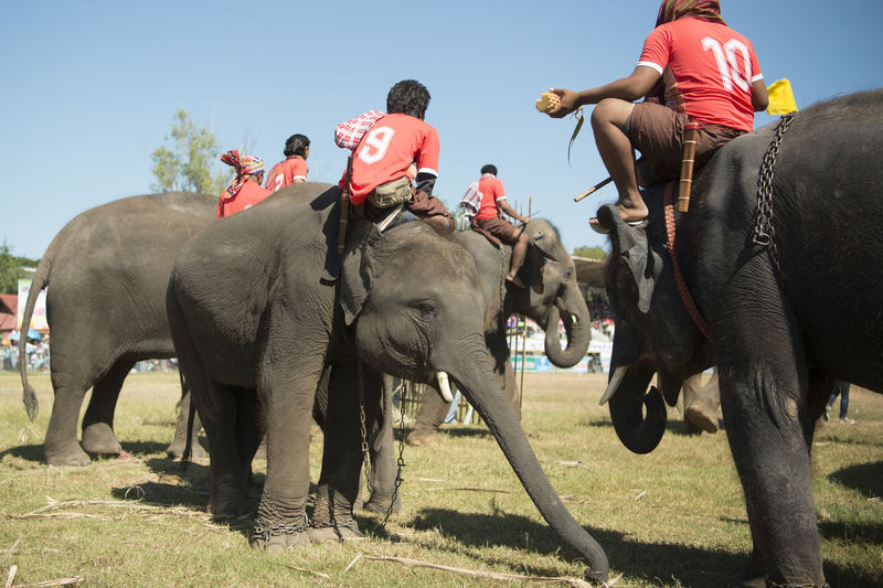 Rear view of men on elephants over field during competition