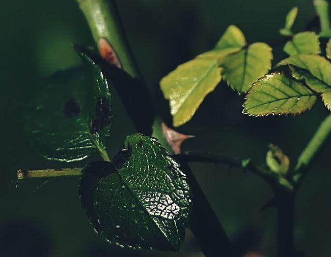 Close-up of leaf on wet leaf