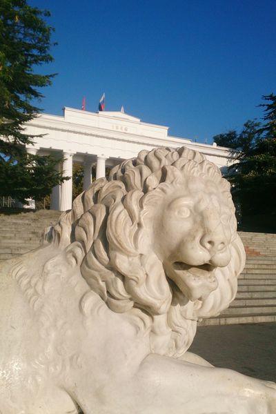 Морской лев. арт  скульптура животные Art Sculpture Animals No People Sky