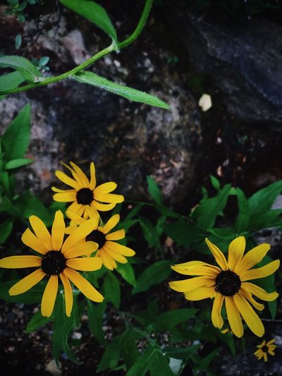 Flower Flowering Plant Plant Yellow Growth Flower Head Inflorescence