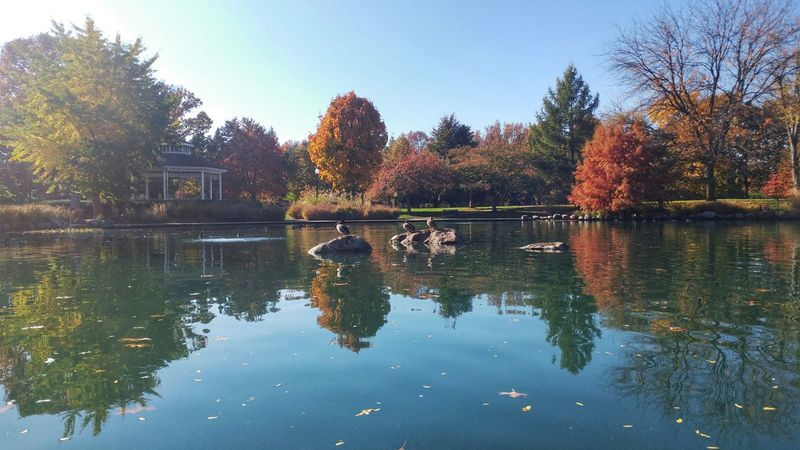 Reflection Water Tree Sky Nature Outdoors Day Geese Leaves Goodale Park Short North Columbus, Ohio Beauty In Nature Beautifully Organized