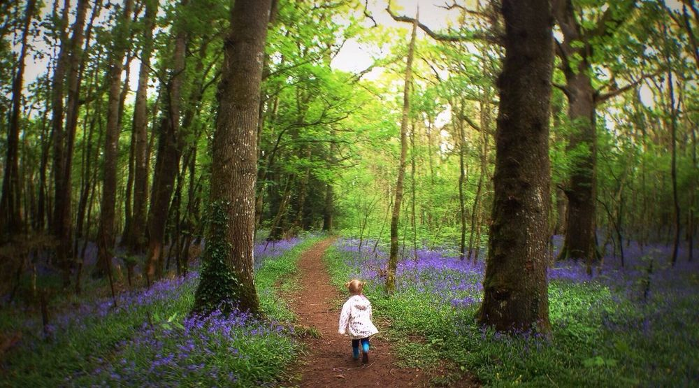 A Walk In The Woods A Walk In The Woods EyeEm Best Shots IPSLight