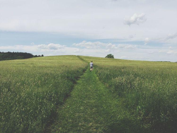 Field Fieldscape Landscape People In Nature Walking Path Journey Walking The Dog Grass High Grass Meadow Landscape_Collection Landscape_photography Nature Nature_collection Nature Photography Man Walking Showcase June