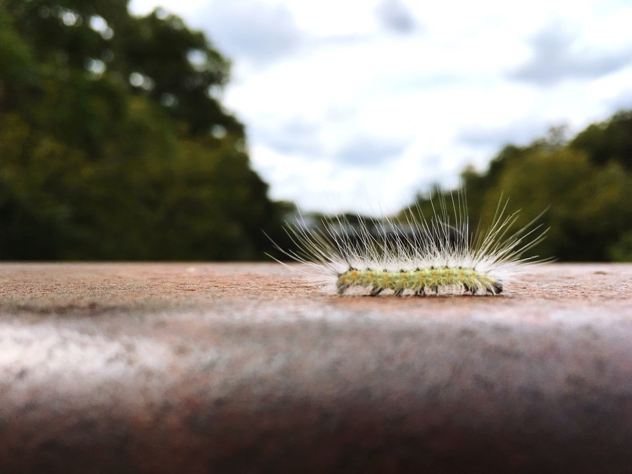 Surface level view of spiked caterpillar on retaining wall