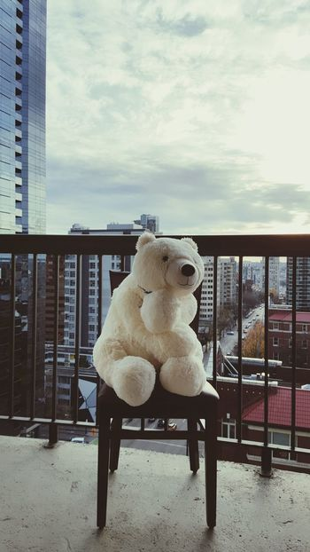 Polar Bear Teddybear Love City View  Just Chillin' Taking Photos Hello World Cheese! Relaxing Hi! Enjoying Life Looking In Lookingout Check This Out That's Me Hanging Out Dont Jump Hights High Enjoying Life Vancouver Hanging Around Hello World Relaxing In The Clouds