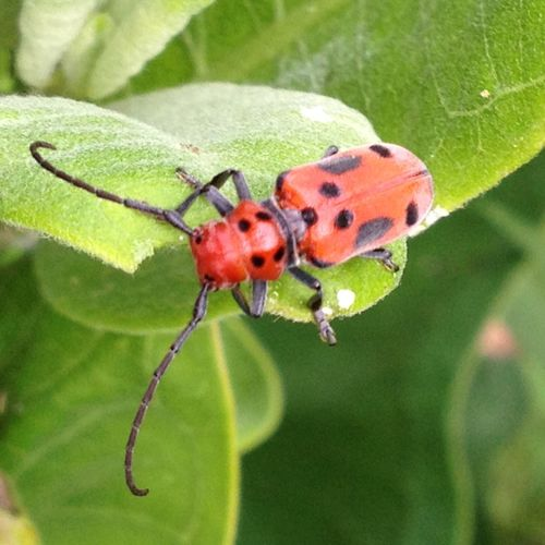 Maximum Closeness Insect Animal Themes Animals In The Wild Close-up One Animal Ladybug No People Plant Nature Leaf Outdoors Day Landscape Wild Closeup