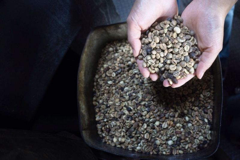 holding coffee beans in cupped hand Coffee Beans Coffee Raw