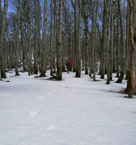 Foresta Red Rosso Trekking Snow Forest Winter Camminare Perdersi Labirinto Blue Sky Mountain Beautiful Nordic Walking Fingerprints Fingerprint Traces In The Snow Traces Walking Nature Natura Free Cold High