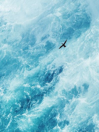 High angle view of bird swimming in sea