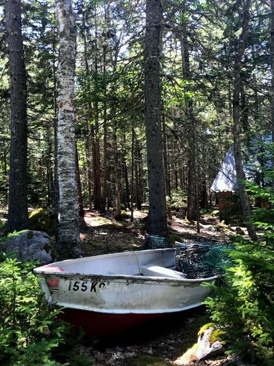 Deer isle, Maine Boat Deer Isle Wreckage Tree Plant Nature Forest Nautical Vessel Growth Text No People Tree Trunk Transportation