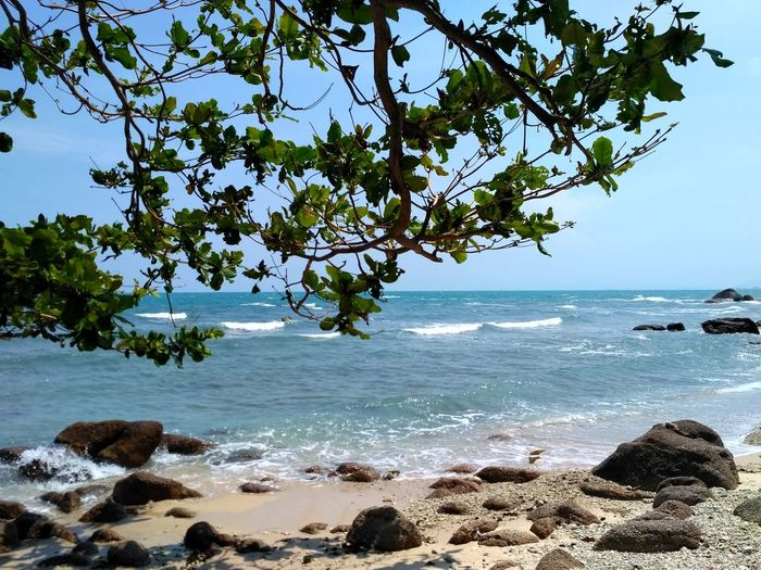 Ko Samui, Thailand Sea Beach Tree Horizon Over Water Nature Beauty In Nature Water Scenics Tranquil Scene Tranquility Outdoors Sky No People Sand Day Landscape Branch Rock - Object Archipelago Sea Life Tranquility Sea And Sky Rocky Mountains Stone Wave