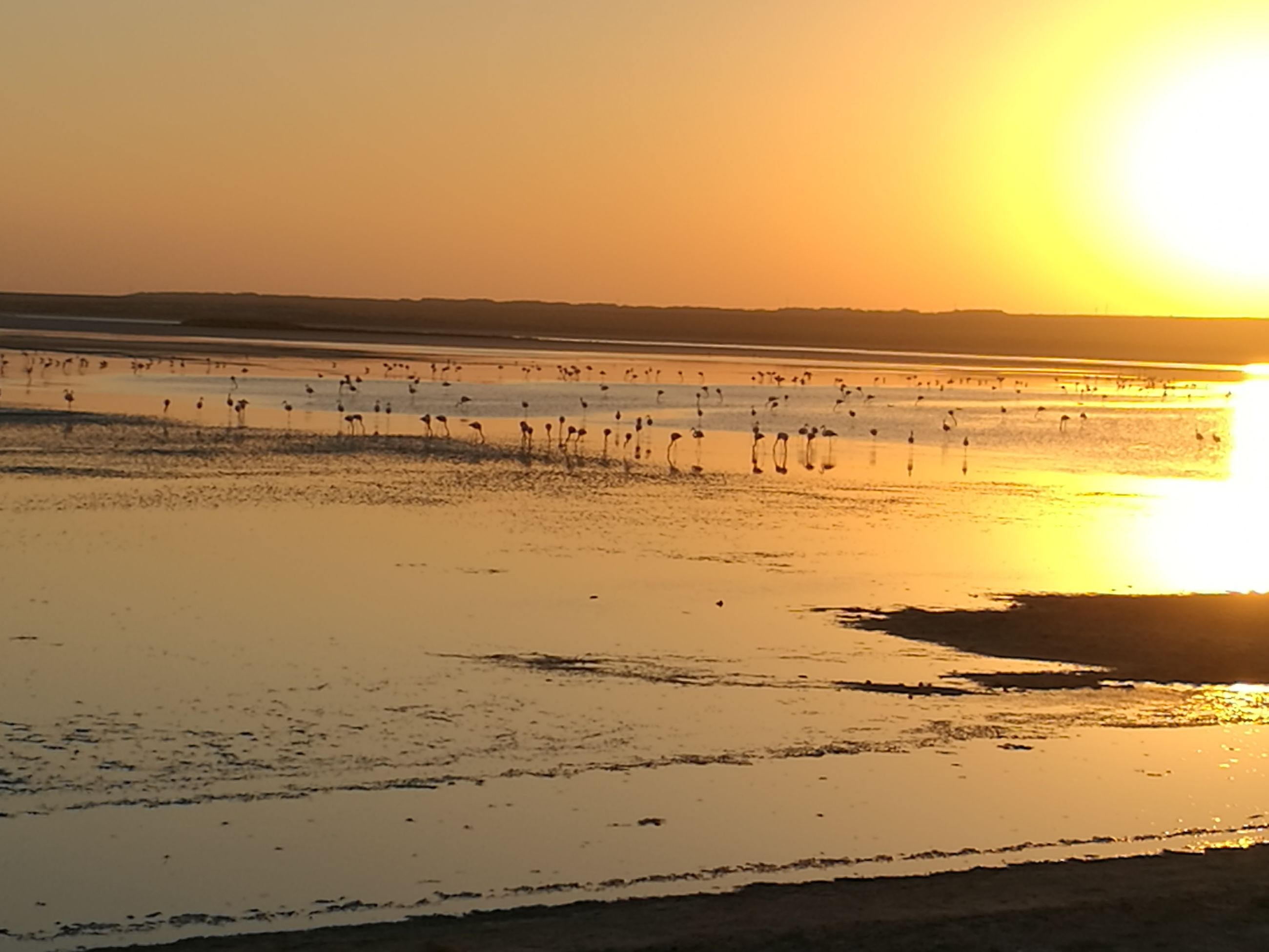 sunset, sun, water, scenics, tranquility, orange color, tranquil scene, sea, beach, beauty in nature, majestic, silhouette, idyllic, ocean, nature, seascape, reflection, calm, non-urban scene, atmosphere, sunbeam, vacations, sky, romantic sky, coastline, distant, horizon, shore