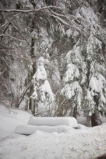 viel Schnee im