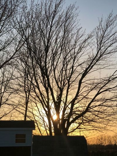 Shine through Sky Sunset Tree Silhouette Architecture Plant Nature Built Structure No People Building Exterior Beauty In Nature Growth Branch Bare Tree House Low Angle View Building Outdoors Orange Color Tranquility
