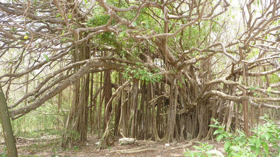 Beauty In Nature Growing Nature Non Urban Scene Roots Roots Of Tree Tree WoodLand