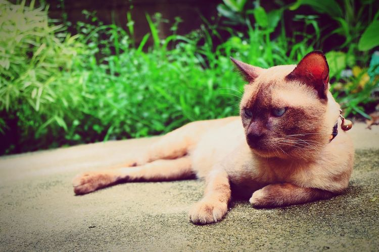 My EyeEm Selects Pets Domestic Animals One Animal Animal Themes Relaxation Portrait Close-up Cat♡ Cat Lovers Cat Watching Cat Photography Domestic Cat Slow Life 😊