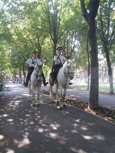 Bucureşti Discover Your City Horses Hanging Out Park Horseriding