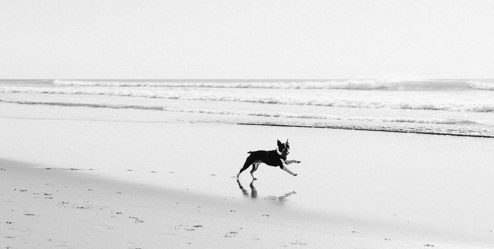 Animal Animal Themes Beach Canine Dog Domestic Domestic Animals Horizon Horizon Over Water Land Mammal Motion Nature One Animal Pets Sand Sea Sky Water My Best Photo