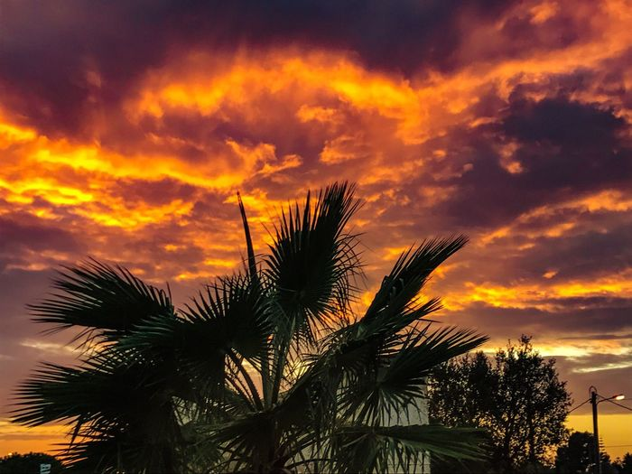 The sky is alive Palm Tree Sky Sunset Low Angle View Cloud - Sky Orange Color Beauty In Nature Dramatic Sky Scenics Growth Tranquility Tree Trunk Outdoors Fiery Sunset... Holiday Albufeira WOW EyeEm Best Shots EyeEm Nature Lover Perspectives On Nature It's On Fire