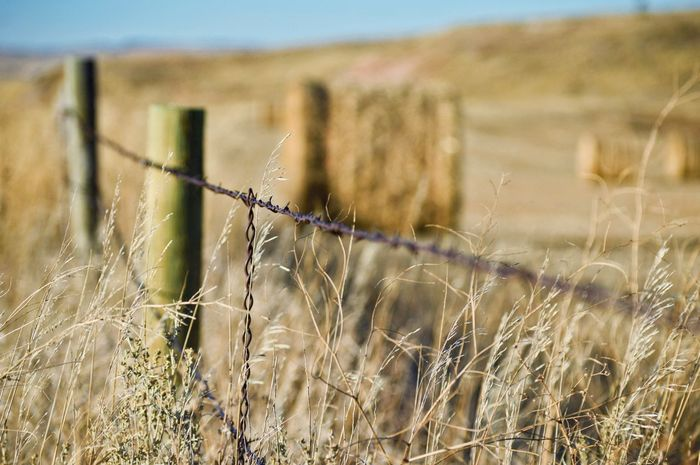 Near fence Hay Bale Tall Grass Late Evening Outdoors Shadows Wooden Post Rural Scene Field Grass Landscape Barbed Wire Fence