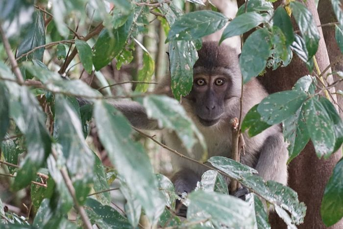 Monkeybusiness  Primate Maqaque EyeEm Ready   AI Now An Eye For Travel