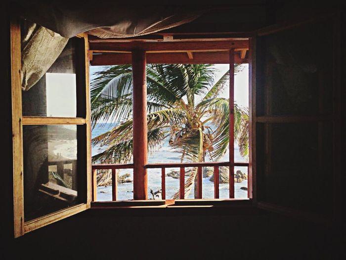Taking Photos Summer Ipod Relaxing Enjoying Life Sun Beach Playa Ventura Palmeras Window Water