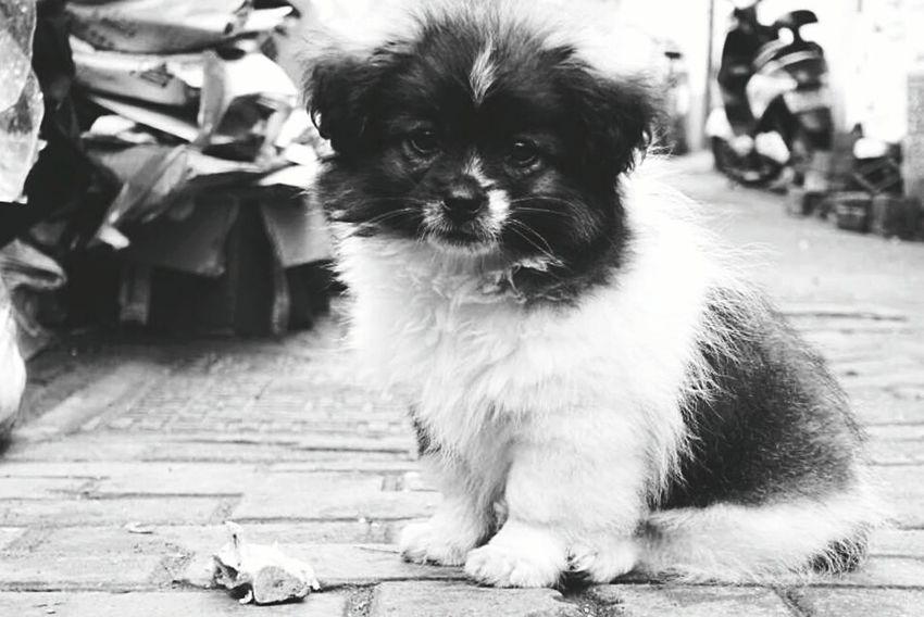 SUZHOU PINGJIANG ST Jiangsu Province Suzhou Gardens Suzhou China SuzhouGarden Suzhou, China Suzhou Hello World Hi! 苏州平江路 Dog Dogs Dogslife Dog❤