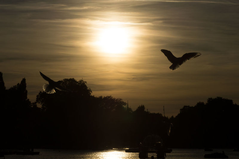 Silhouetted View Of Birds Flying Over River By Trees