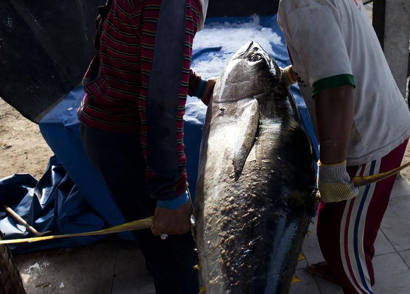 Big Tuna at Kedonganan Fish Market Bali Backgrounds Bal Catch Of Fish Close-up Fish Market Freshness Giant Fish Healthy Food Kedonganan Loaded Low Section People Sea Food Teamwork Tuna Tuna Fish Yellow Stripe Tuna
