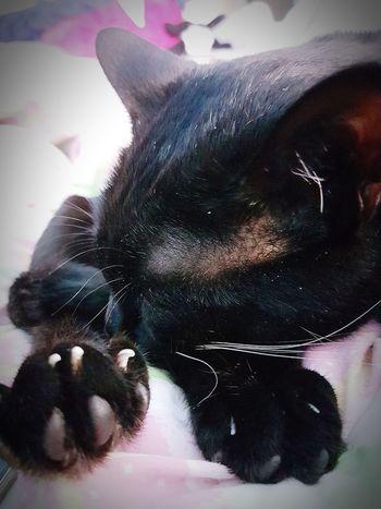 😻my Sweety Cat😻 Cats 🐱 Blackcatsaregood Blackcatsaregoodluck Blackcatsclub Blackcatbeauties Cat Lovers Catoftheday Eyeem Photography Blackcatsofinstagram Cats Of EyeEm Sleepingcat Sleeping Cat On Worldcatday ;-)