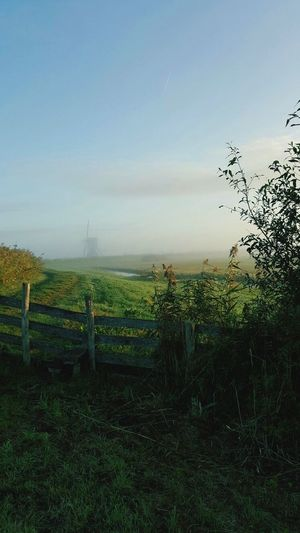 Field Nature Growth Scenics Tranquility Rural Scene Beauty In Nature Tranquil Scene Landscape Sky Agriculture Tree Outdoors Grass No People Green Color Plant Day Windmill Its My Life Netherlands Nature_collection Misty Morning Foggy Morning Tired