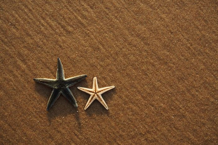 Star Shape Starfish  High Angle View Copy Space Beach Sand No People Rug Directly Above Sea Life Studio Shot Indoors  Vacations Christmas Decoration Day Close-up Nature Animal Themes Couple Two Partner Together Relative Annelida Invertebrate