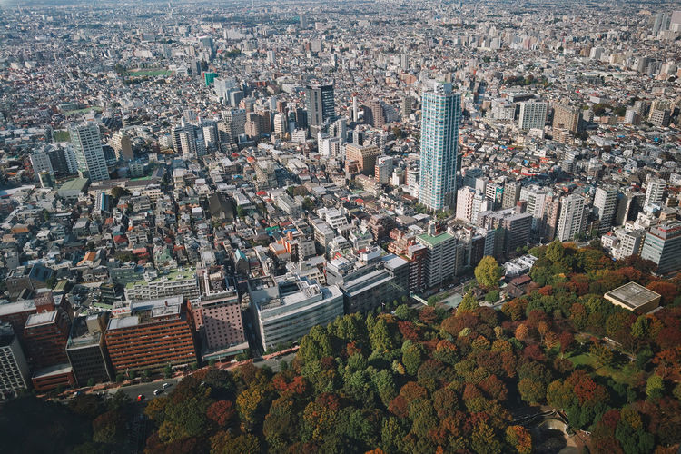 Bird's eye beautiful city view from a Tokio skyscraper at autumn park with bright colored autumn leaves. Momiji in Japan. Building Exterior City Cityscape Architecture Built Structure Building Crowded Crowd Residential District High Angle View Day Nature City Life Aerial View Outdoors Travel Destinations Office Building Exterior Tower Community Skyscraper Modern Japan Tokyo,Japan ASIA