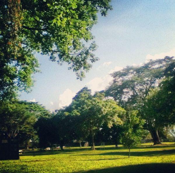 Park Trees San Pedro Sula, Honduras