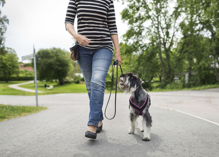 Low section of person with dog standing on street