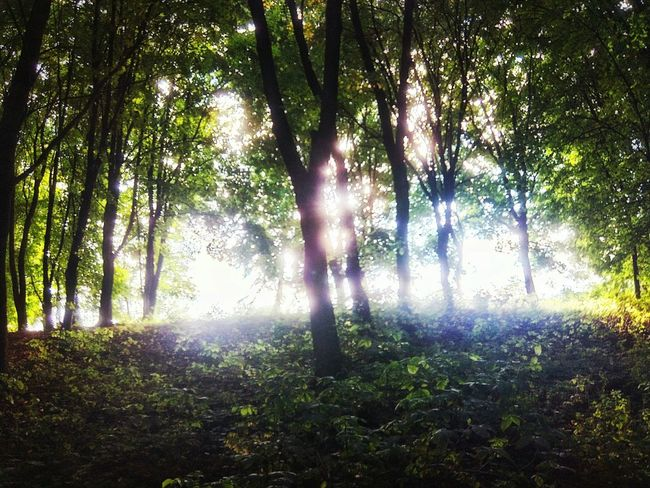 Ukraine Phoneography Foret Search The Light Protecting Where We Play