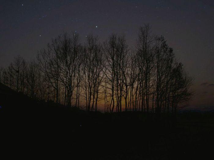 Tree Star Nightsky Night Stars Nightphotography Under The Milky Way