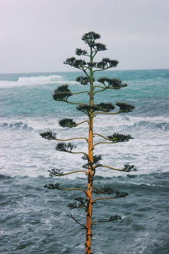 Tree at sea against sky