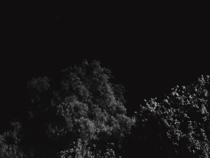 Black SkyBlack Tree Dark