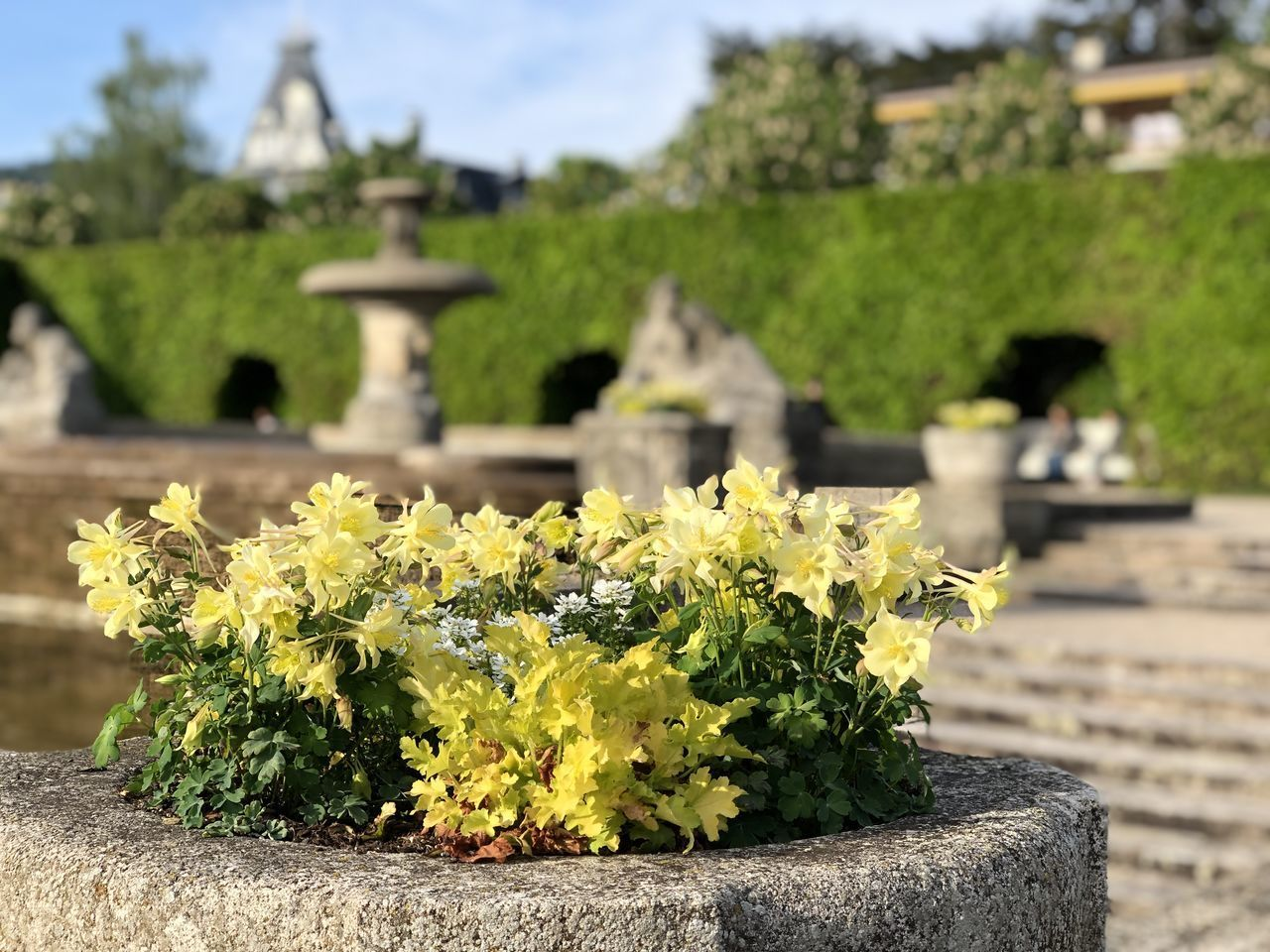 YELLOW FLOWERING PLANT AT CEMETERY AGAINST TEMPLE
