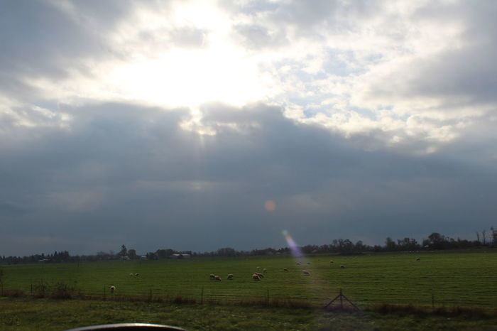 Sun Dog Agriculture Animal Themes Beauty In Nature Cloud - Sky Day Field Grass Landscape Nature No People Outdoors Rural Scene Scenics Sky Tranquil Scene Tranquility Tree