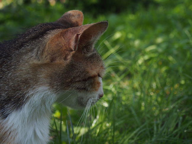 Animal Body Part Animal Head  Beauty In Nature Close-up Day Domestic Animals Domestic Cat Feline Field Focus On Foreground Grass Grassy Green Color Growth Homeless Homeless Cats Mammal Nature No People Outdoors Pets Showcase July Selective Focus Smelly Cat Whisker