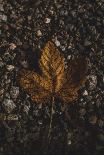 Leave Germany Sony Stones Boden Steine Blatt Leaves Leaf