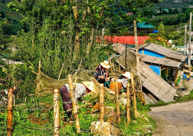 Vietnam SaPa High Angle View Day Plant Land Nature No People Multi Colored Field Outdoors Growth Sunlight Grass Green Color Occupation Vertebrate Large Group Of Objects Group Working Fishing Industry