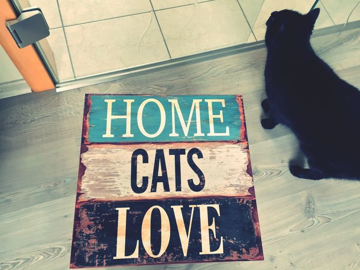 Home Cats Love 🏠😺💜 Cats 🐱 Cats Cat Lovers Cat Lover Cat Love Katzenliebe Katze Katzen 💜 Katzen Cat House Katzenhaus Domestic Cat Hauskatze Iphonegraphy Hobbyphotography Hobbyfotograf Tiere♡ Animals🐾
